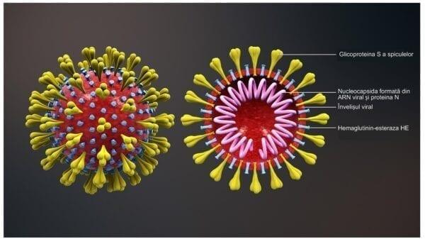 Coronavirus Example